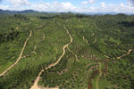 Oil palm plantation in Borneo -- sabah_aerial_0598