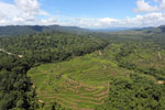 Forest and oil palm plantations in Borneo -- sabah_aerial_0622