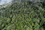 Tropical rain forest in Borneo -- sabah_aerial_0924