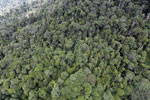 Tropical forest in Borneo -- sabah_aerial_0925