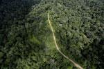 Logging road in the Borneo rainforest