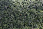 Borneo rainforest -- sabah_aerial_1033