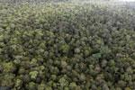 Borneo rainforest -- sabah_aerial_1087