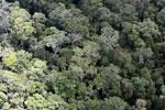 Borneo rainforest -- sabah_aerial_1120