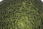 Borneo rainforest -- sabah_aerial_1208