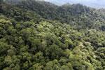 Borneo rainforest -- sabah_aerial_1623