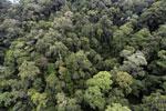 Borneo rainforest -- sabah_aerial_1634