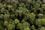 Borneo rainforest -- sabah_aerial_1639