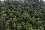 Borneo rainforest -- sabah_aerial_1645