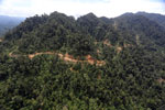 Industrial timber harvesting in Malaysian Borneo
