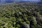 Borneo rainforest -- sabah_aerial_1884
