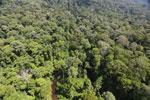 Imbak Canyon -- sabah_aerial_2025