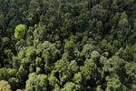 Selectively logged forest in Borneo -- sabah_aerial_2261