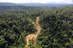 Logging road in Borneo -- sabah_aerial_2342