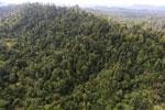 Borneo rainforest -- sabah_aerial_2414