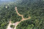 Logging road -- sabah_aerial_2417