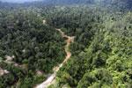 Logging road -- sabah_aerial_2428