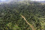 Logging road -- sabah_aerial_2444
