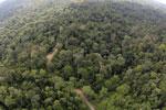 Borneo rainforest -- sabah_aerial_2520