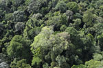 Borneo rainforest -- sabah_aerial_2530