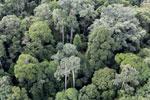 Borneo rainforest -- sabah_aerial_2580