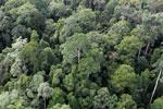 Borneo rainforest -- sabah_aerial_2583