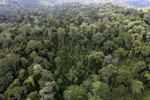 Borneo rainforest -- sabah_aerial_2601