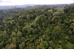 Borneo rainforest -- sabah_aerial_2682