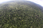 Aerial view of heavily logged rainforest -- sabah_aerial_2715