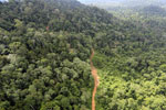 Aerial view of heavily logged rainforest -- sabah_aerial_2735