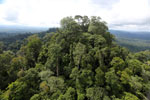 Selectively logged forest under FSC criteria -- sabah_aerial_2757