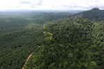 Logged forest and oil palm in Borneo