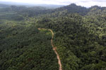 Logged forest and oil palm in Borneo -- sabah_aerial_2811