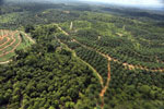 Oil palm estate and rainforest in Malaysian Borneo -- sabah_aerial_3011