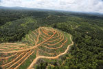 Oil palm estate and rainforest in Malaysian Borneo -- sabah_aerial_3018