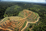 Oil palm estate and rainforest in Malaysian Borneo