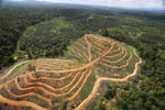 Oil palm estate and rainforest in Malaysian Borneo -- sabah_aerial_3025