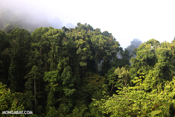 Rainforest in Danum Valley. Photo by: Rhett A. Butler.