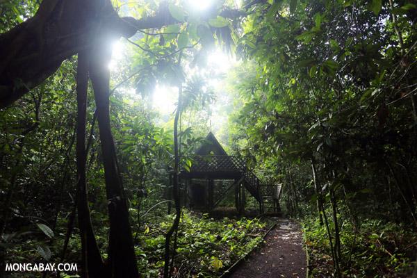 Ecoturismo en Borneo