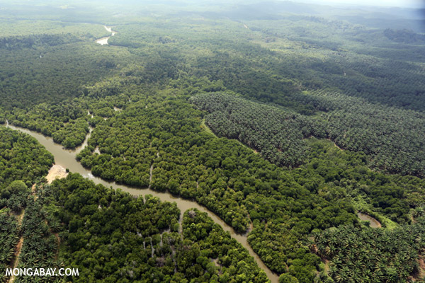 Oil palm plantation and mangroves in Malaysia.
