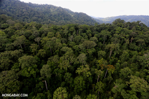 Rainforest in Sabah, Malaysian Borneo. Photo by Rhett A. Butler.