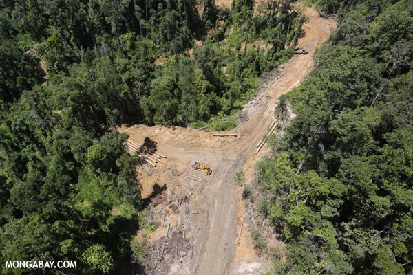 http://mongabay.s3.amazonaws.com/sabah/600/sabah_aerial_0649.jpg