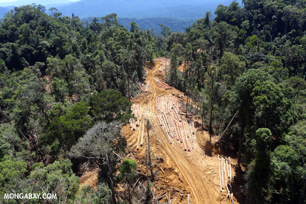 Conventional logging in Borneo. Photo by Rhett A. Butler.