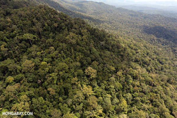 Aerial view of rainforest in Sabah. Photo by: Rhett A. Butler.