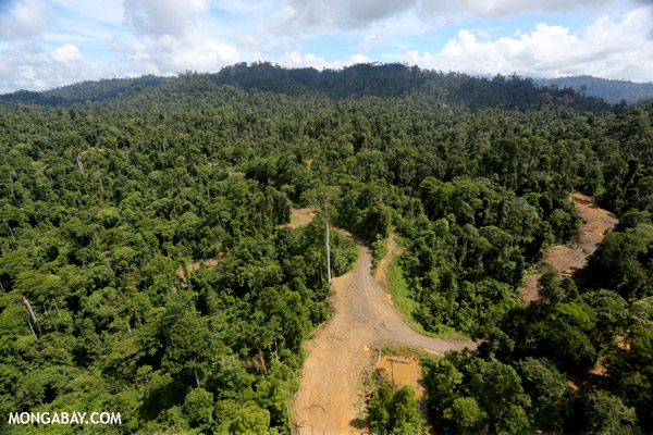 Logging road in Borneo.