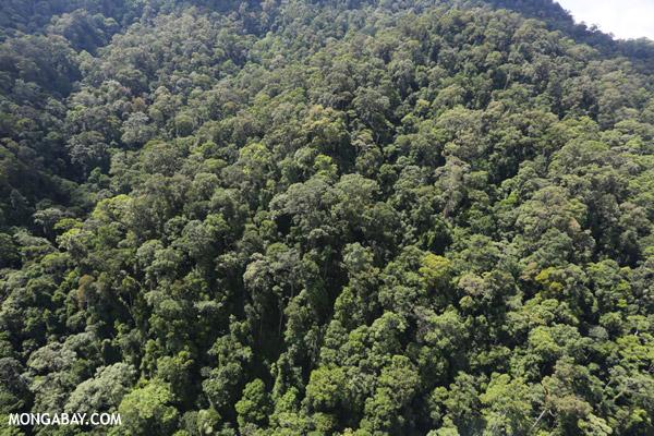 Imbak Canyon -- sabah_aerial_2203