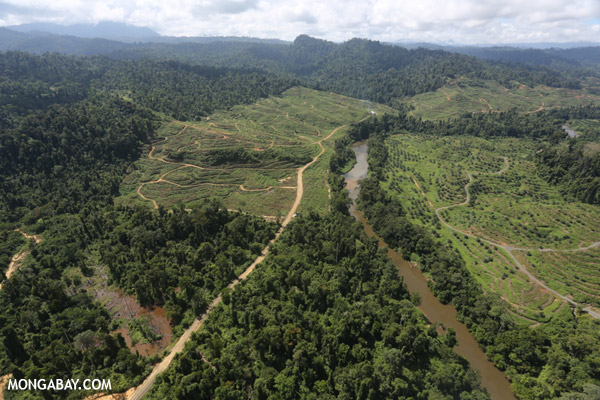 Rainforest cleared for oil palm plantations in Borneo. Photo by: Rhett A. Butler.
