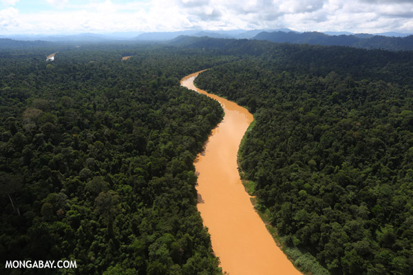 The Kinabatangan River in the Malaysian state of Sabah, Borneo. Photo by: Rhett A. Butler.