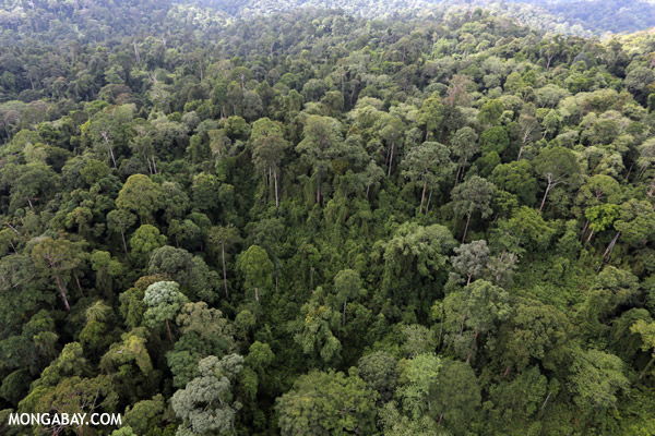 Rainforest in Borneo. Photo by: Rhett A. Butler.