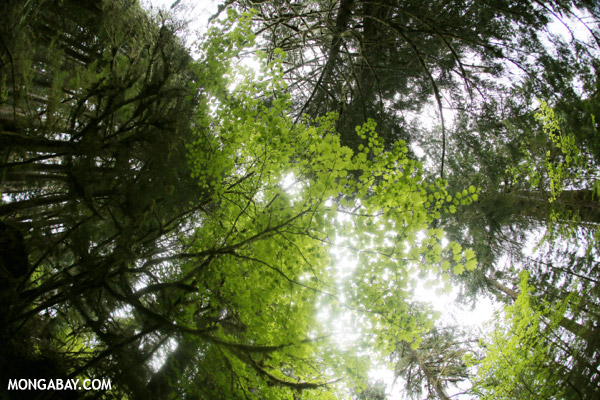 Olympic Peninsula temperate rainforest